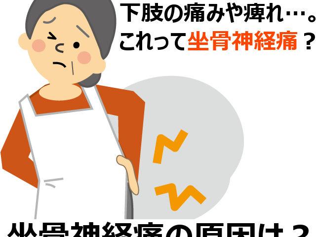 坐骨神経痛について千葉県流山市の整体師が解説